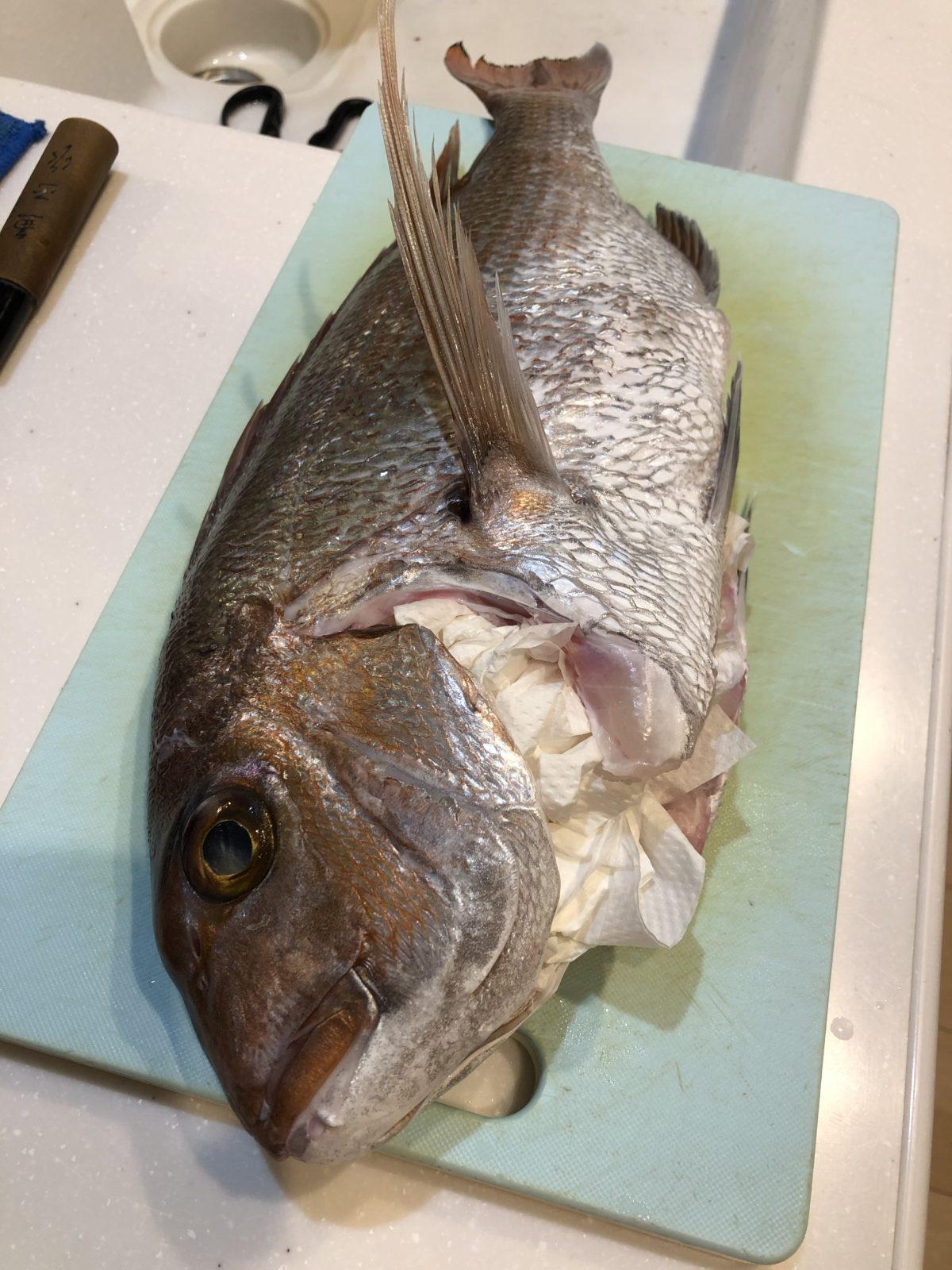 【ガチで】真鯛を熟成させた結果【美味い】